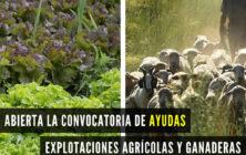 20200604_Ayudas agricultura y ganaderia DANA
